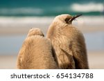 juvenile king penguins shelter... | Shutterstock . vector #654134788