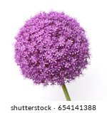 Stock photo a macro closeup of a curious funny purple pink garden allium flower cluster from onion and garlic 654141388