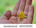 a small yellow flover in hand | Shutterstock . vector #654152050