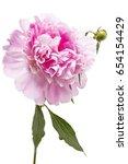 beautiful pink peony flower ...   Shutterstock . vector #654154429