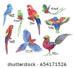 hand drawn painted set of... | Shutterstock . vector #654171526