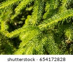 beautiful green needles spruce