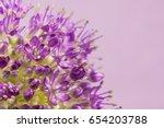 Allium  Gigantium  Flowers.