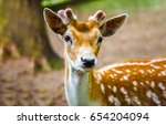 Deer Fawn Portrait