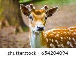 Deer Fawn Portrait