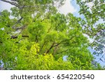 beautiful forest. natural...   Shutterstock . vector #654220540