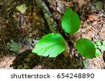 a seedling growing on the...   Shutterstock . vector #654248890