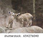 twin nubian ibex nuzzling... | Shutterstock . vector #654276040