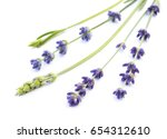 bunch of lavender on a white... | Shutterstock . vector #654312610