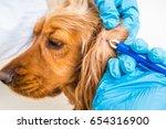 veterinarian doctor removing a... | Shutterstock . vector #654316900