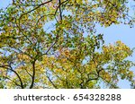 upper branches of trees... | Shutterstock . vector #654328288