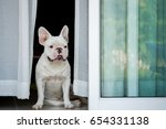 the puppy of the english... | Shutterstock . vector #654331138