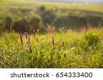 field of wild lupinus on the... | Shutterstock . vector #654333400