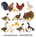 poultry farming. chicken ...   Shutterstock .eps vector #654339430