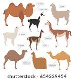 camel  llama  guanaco  alpaca... | Shutterstock .eps vector #654339454