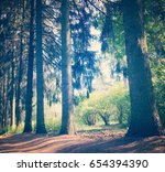forest in the summer. forest... | Shutterstock . vector #654394390