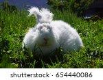 Stock photo angora rabbit 654440086