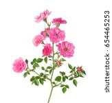 branch with small  pink roses... | Shutterstock . vector #654465253