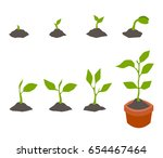infographic of planting tree.... | Shutterstock .eps vector #654467464