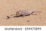 desert adapted namaqua... | Shutterstock . vector #654475894