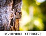 Cicada Bug. Cicada Insect....