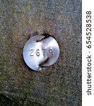 Identification Tag On Beech Tree
