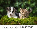 Stock photo little puppy with a little tabby kitten 654539083