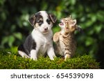 Stock photo little tabby kitten playing with little puppy 654539098
