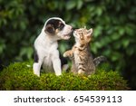 Stock photo little puppy playing with a little tabby kitten 654539113