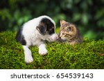 Stock photo little puppy with a little tabby kitten 654539143