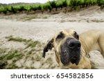 dog hound  detail of a free dog ... | Shutterstock . vector #654582856