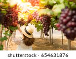 Woman Is Harvest Grapes At Farm.