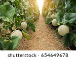 young sprout of japanese melons ... | Shutterstock . vector #654649678