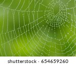 Cobweb  spiderweb with water...