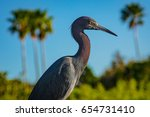 little blue heron | Shutterstock . vector #654731410