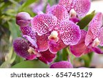 Beautiful Orchid Flower And...