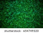 creative layout made of green... | Shutterstock . vector #654749320