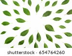 green leaves as a frame on... | Shutterstock . vector #654764260