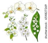 white flower set   lily of the... | Shutterstock .eps vector #654827269