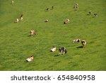 cows in emmental region ... | Shutterstock . vector #654840958