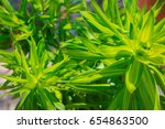 green leaves illuminated by the ... | Shutterstock . vector #654863500