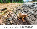 Closeup Image Of Brown Frog...