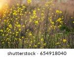 little yellow meadow flowers ... | Shutterstock . vector #654918040