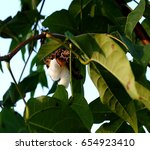 cotton on the tree | Shutterstock . vector #654923410