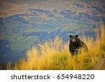 black bear in alaska | Shutterstock . vector #654948220