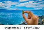 tiny nug in hand at the beach | Shutterstock . vector #654948580