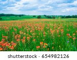 A Field Of Blooming Indian...