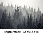 layers of tall pine trees get... | Shutterstock . vector #655016548