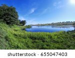 Marsh Grass Of Biviere Lake In...