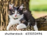 Stock photo cute cat is lying on the tree little kitten on a branch cute pets have white and black colors on a 655053496